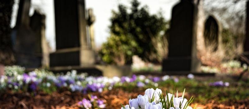 Cementerio Cementerio de Cerecinos del Carrizal en Cerecinos del Carrizal